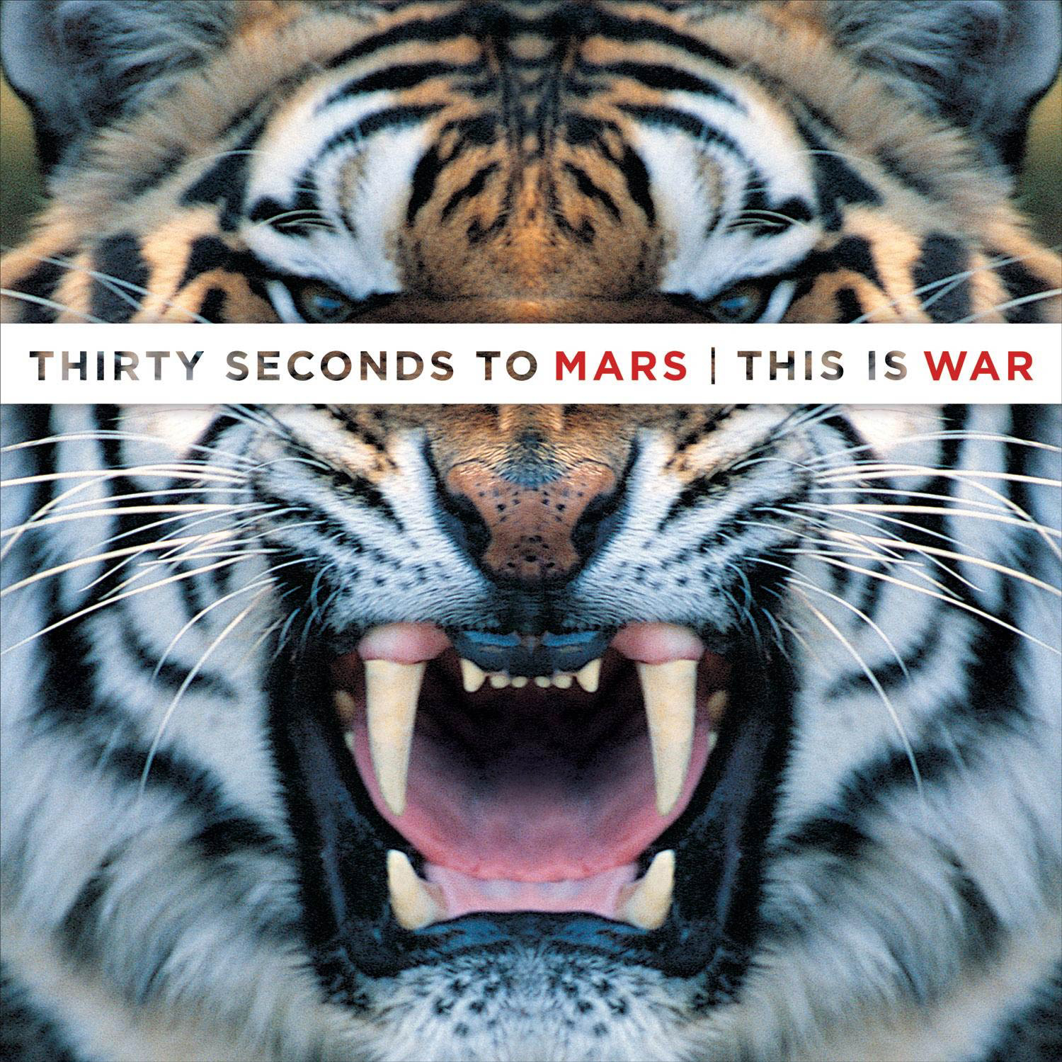 30 seconds to mars this is war zippy